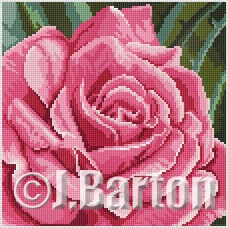 Pink rose (cross stitch chart download)