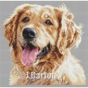 Golden retriever cross stitch chart